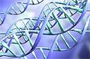 Дети и подростки, имеющие определенную вариацию генов, более склонны к ожирению печени