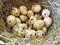 Перепелиные яйца помогают в лечении печени