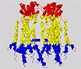 Ученые открыли состав вируса гепатита С
