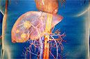 Причины, признаки, симптомы, стадии и лечение рака печени