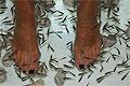 Рыбный педикюр может распространять ВИЧ-инфекции и гепатит С