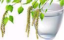 Лечение почек соками, фруктами и овощами